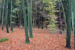 Waldfläche Herbst