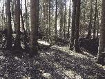 Hochwald in Pöhlde