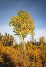 Es wird Herbst im Wald