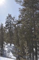Blick in verschneiten Wald